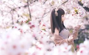 Картинка девушка, кукла, сакура