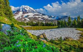 Картинка снег, деревья, цветы, горы, США, штат Вашингтон