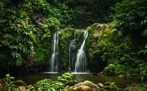 Картинка зелень, лес, деревья, парк, ручей, камни, водопад, мох, Португалия, кусты, Parque Natural da Ribeira dos …
