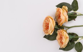 Картинка розы, букет, бутоны, leaves, orange, roses