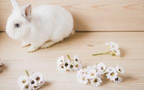 Картинка Цветы, Кролик, Белый, Животное
