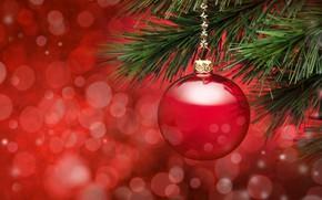 Картинка иголки, красное, игрушка, ель, ветка, Новый Год, Рождество, ёлка, украшение, Christmas, праздники, New Year, новогодняя