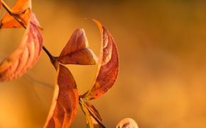 Картинка осень, листья, природа, ветка