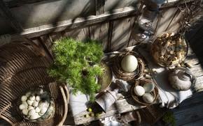 Картинка вид, растение, тени, предметы, GOOD MORNING