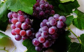 Картинка листья, Кисти, Виноград, Ягода