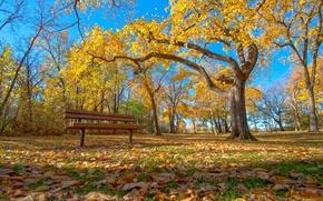 Картинка осень, небо, трава, листья, деревья, парк, скамья