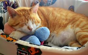 Картинка кошка, кот, уют, игрушка, сон, рыжий, спит, лежит, толстый, лежанка, упитанный, лежбище, пузанчик
