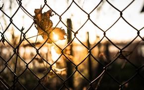 Обои лист, забор, свет, осень