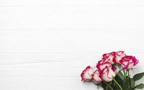 Картинка фон, розы, Цветы, букет