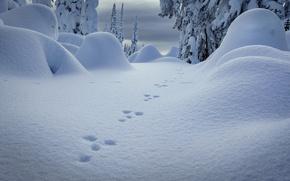 Обои следы, холод, зима, снег