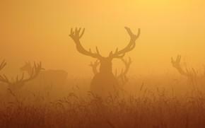Картинка ночь, туман, олени