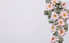 Картинка листья, цветы, фон, Хризантемы