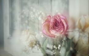 Картинка роза, винтаж, боке, гипсофила