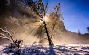 Обои зима, снег, утро
