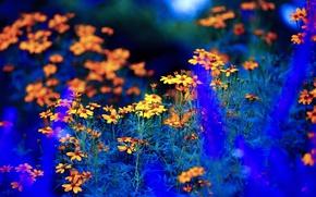 Картинка поле, лето, цветы, луг