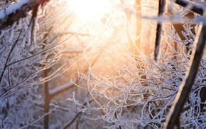 Картинка зима, свет, снег, ветки, природа