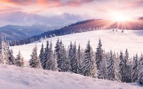 Картинка зима, поле, лес, небо, солнце, облака, лучи, снег, пейзаж, горы, холмы, вид, ели, склон, мороз, ...