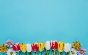 Картинка Цветы, Тюльпаны, Фон, Хризантемы