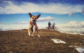Картинка поле, небо, собака, прогулка
