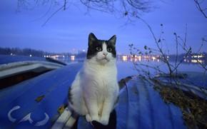 Картинка кот, фон, сидит, коте