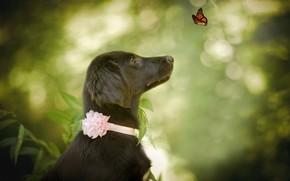 Обои природа, животное, бабочка, собака, профиль, пёс, боке