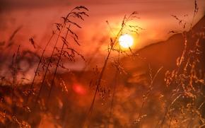 Картинка трава, восход, рассвет, Норвегия, боке