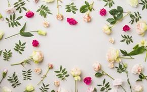 Картинка цветы, Розы, Эустома