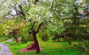 Картинка Природа, Весна, Парк, Nature, Park, Spring, Цветение, Flowering
