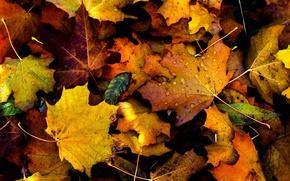 Обои autumn, drops, fall, foliage