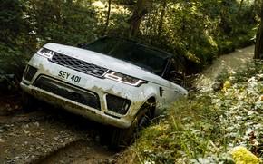 Картинка дорога, лес, растения, лужа, грязь, колея, Land Rover, чёрно-белый, Range Rover Sport P400e Plug-in Hybrid
