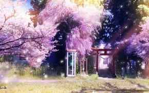Картинка весна, сакура, телефонная будка, тории