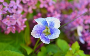Картинка Весна, Цветок, Flower, Spring