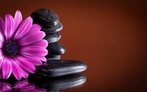 Картинка камни, purple, гербера, colorful, gerbera, flowers