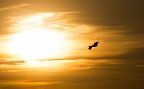 Картинка небо, природа, птица