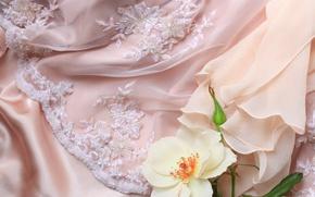 Картинка цветок, роза, ткань, кружево