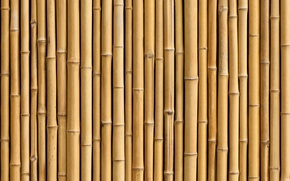 Картинка Bamboo, plant, trunk