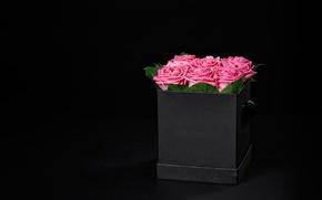Картинка коробка, розы, букет, розовые, box, flowers, romantic, Maxim Denisenko