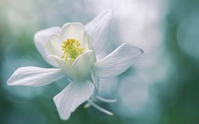 Картинка белый, цветок, соцветие