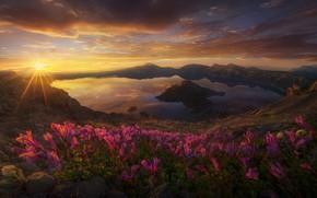 Обои США, цветы, озеро, солнце, вулкан