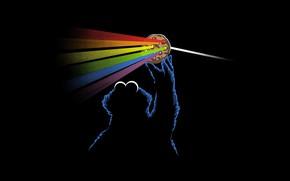 Картинка Музыка, Pink Floyd, Призма, Рок, Тёмная сторона Луны, Коржик, Печенька, Cookie Monster, Пинк Флойд, The …