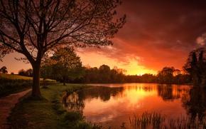 Картинка река, дерево, зарево, тропинка