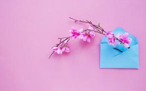 Обои цветы, фон, ветка, весна, розовые, pink, blossom, flowers, конверт, letter, spring