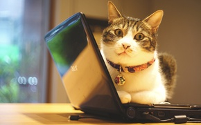 Обои кошка, глаза, кот, взгляд, свет, уют, стена, портрет, техника, окно, офис, лежит, ошейник, мордашка, полосатый, ...