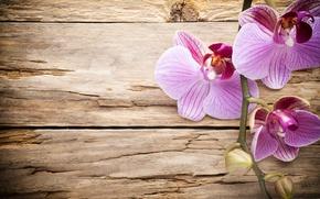Картинка wood, орхидея, pink, orchid