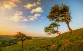 Картинка деревья, пейзаж, холмы, Англия, Йоркшир
