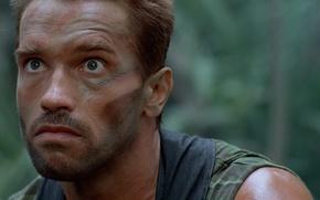Обои cinema, The Beast, soldier, Predator, jungle, man, movie, face, film, Arnold Schwarzenegger, strong, Dutch, muscular, ...