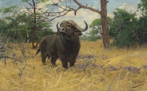 Картинка German painter, Фридрих Вильгельм Кунерт, немецкий живописец, Friedrich Wilhelm Kuhnert, A Kaffir buffalo in Savannah