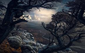 Обои деревья, горы, природа, Южная Америка, Патагония