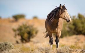 Картинка конь, ветер, лошадь, грива, профиль, дикий, буланый