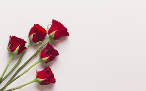 Картинка цветы, розы, букет, красные, red, love, flowers, romantic, roses